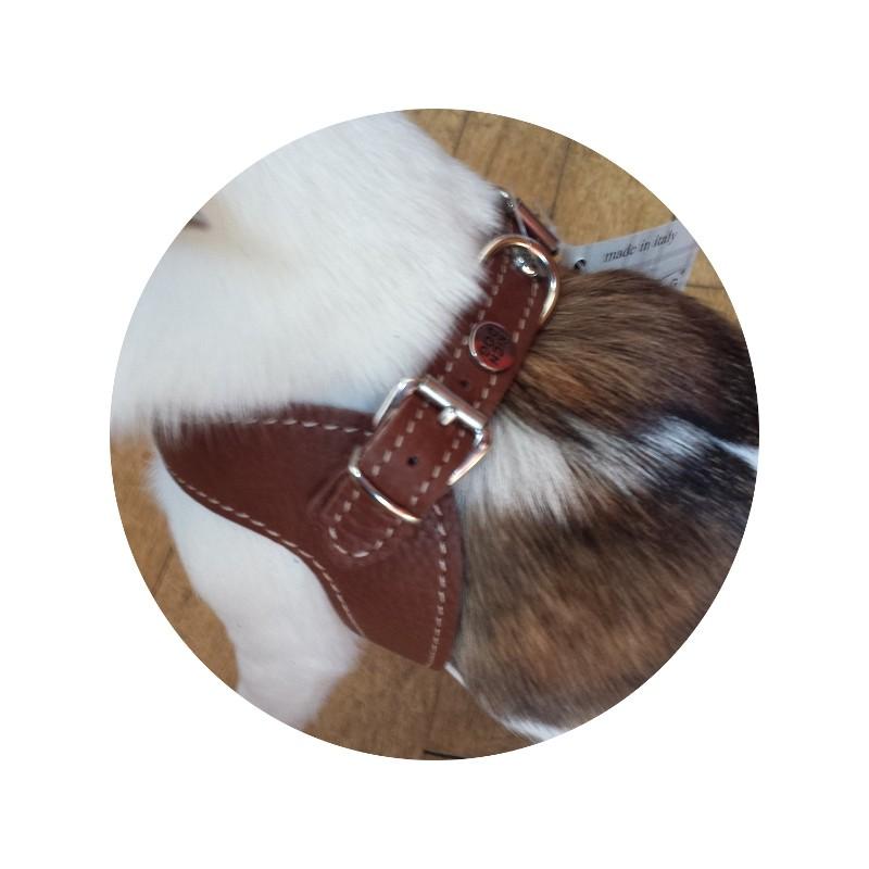Harnais cuir et laisse en corde marine marron richdog pour - Laisse corde gros chien ...