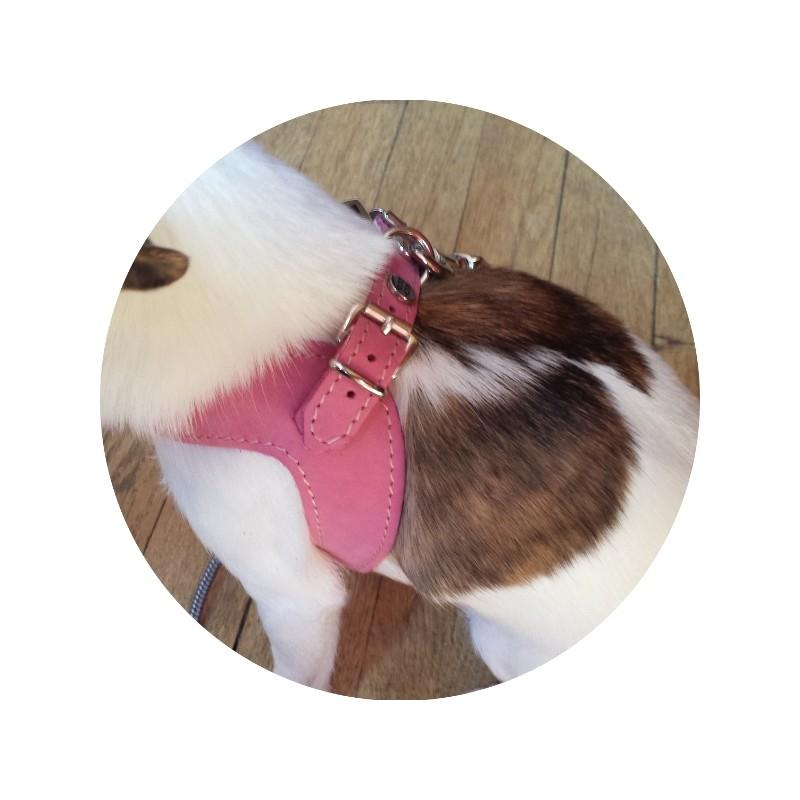 Harnais cuir et laisse en corde marine rose richdog pour - Laisse corde gros chien ...
